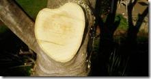 tree heart 2
