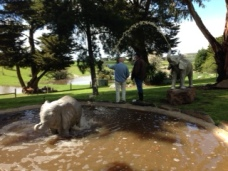 Elephants or Shetland ponies